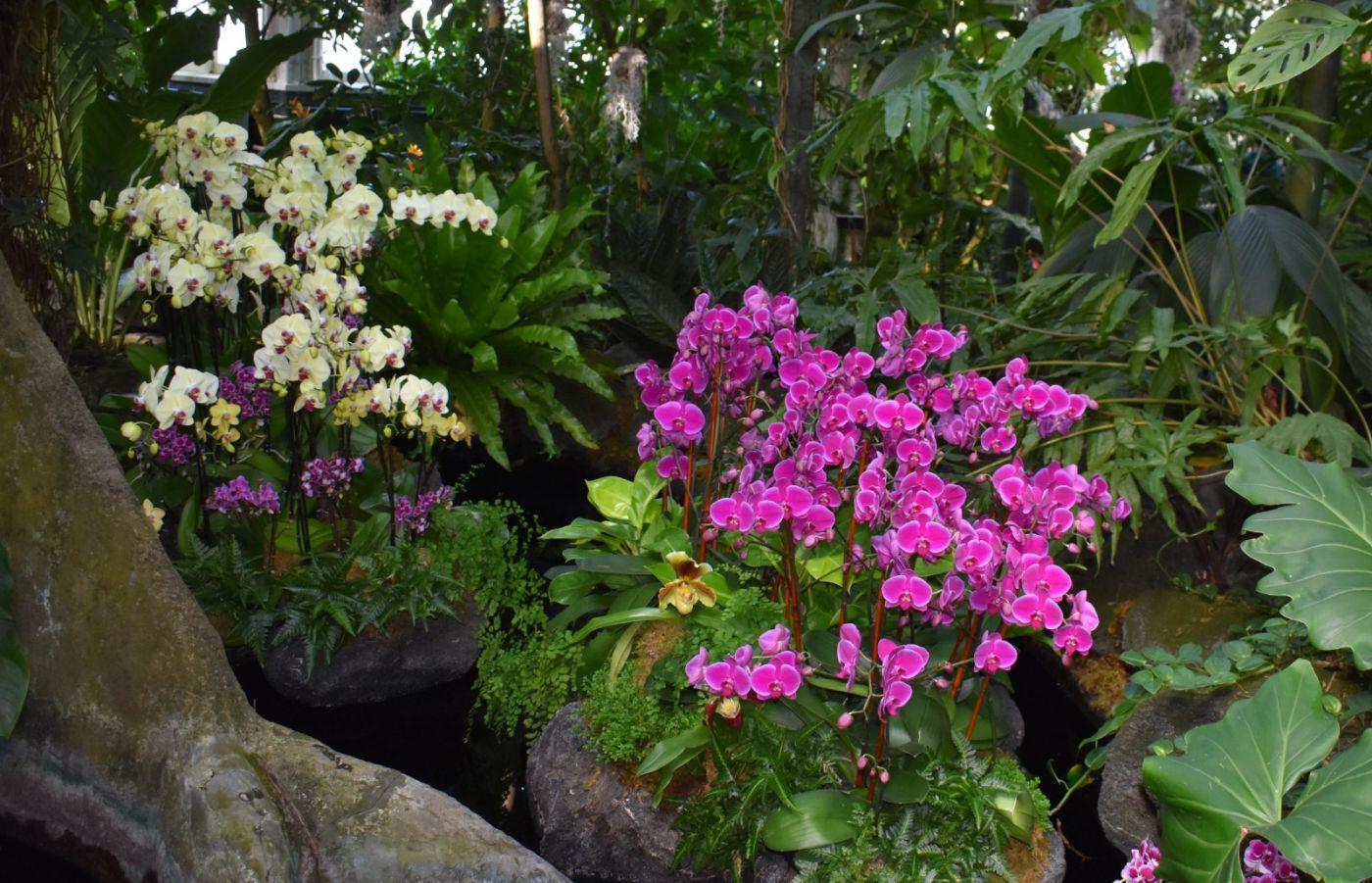 纽约植物园兰花展_图1-3