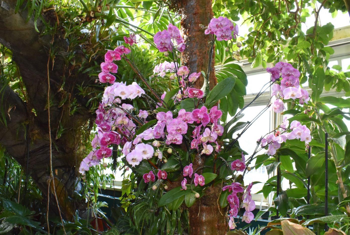 纽约植物园兰花展_图1-10