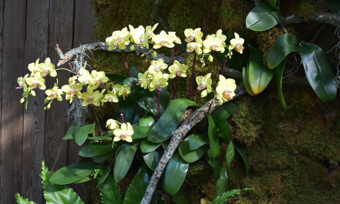 纽约植物园兰花展_图1-15