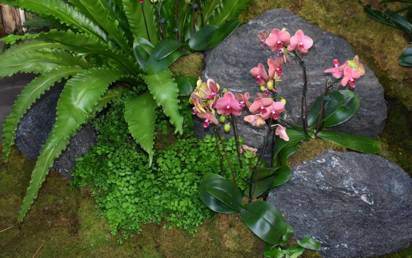纽约植物园兰花展_图1-17