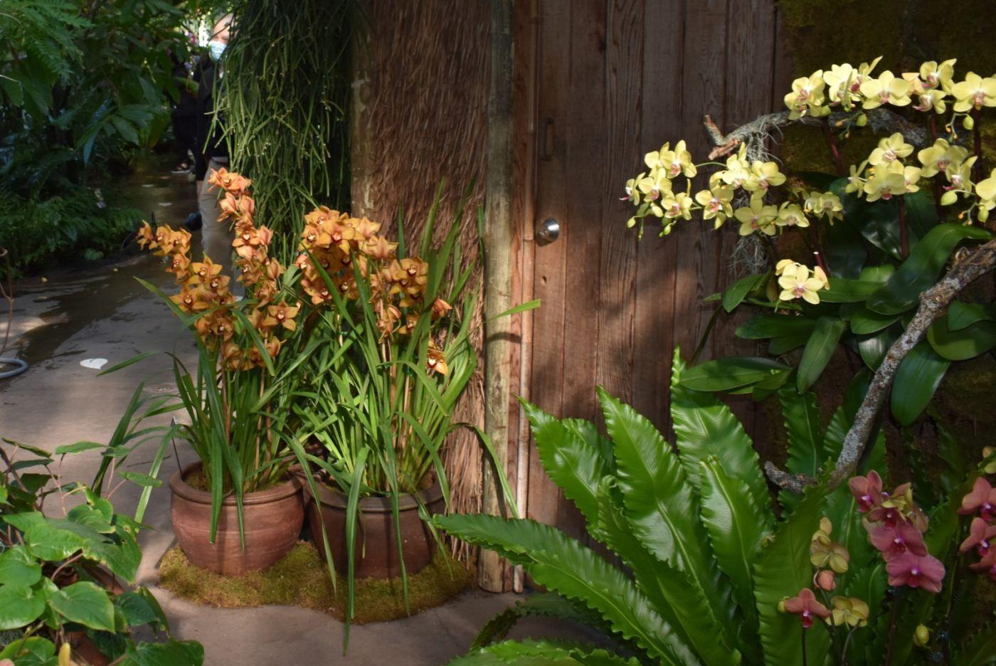 纽约植物园兰花展_图1-18