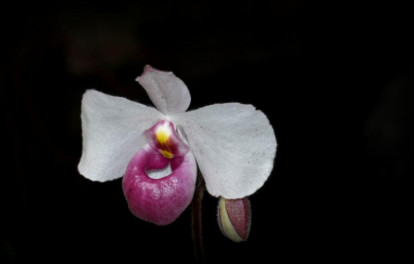 纽约植物园兰花展_图1-20