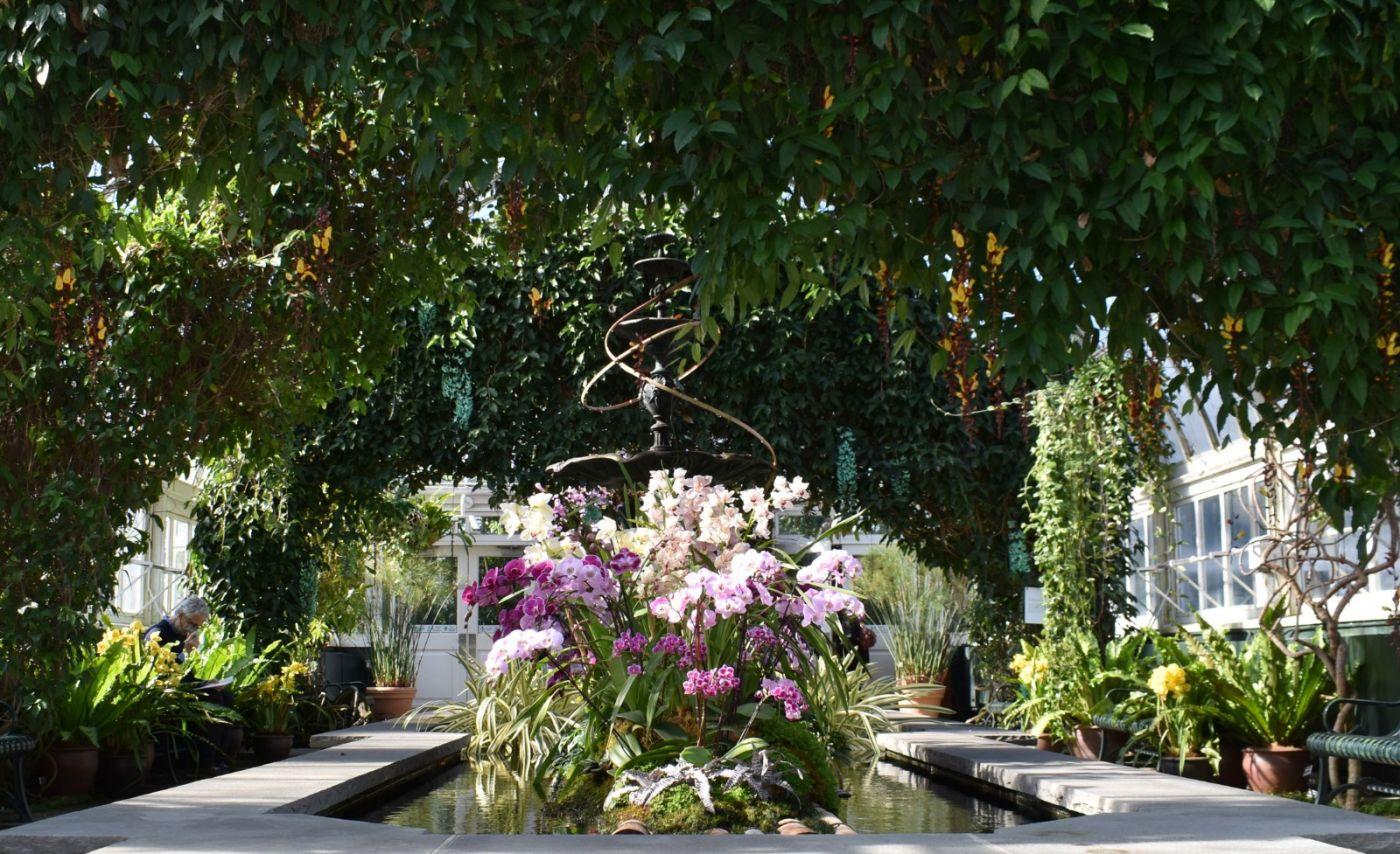 纽约植物园兰花展_图1-22