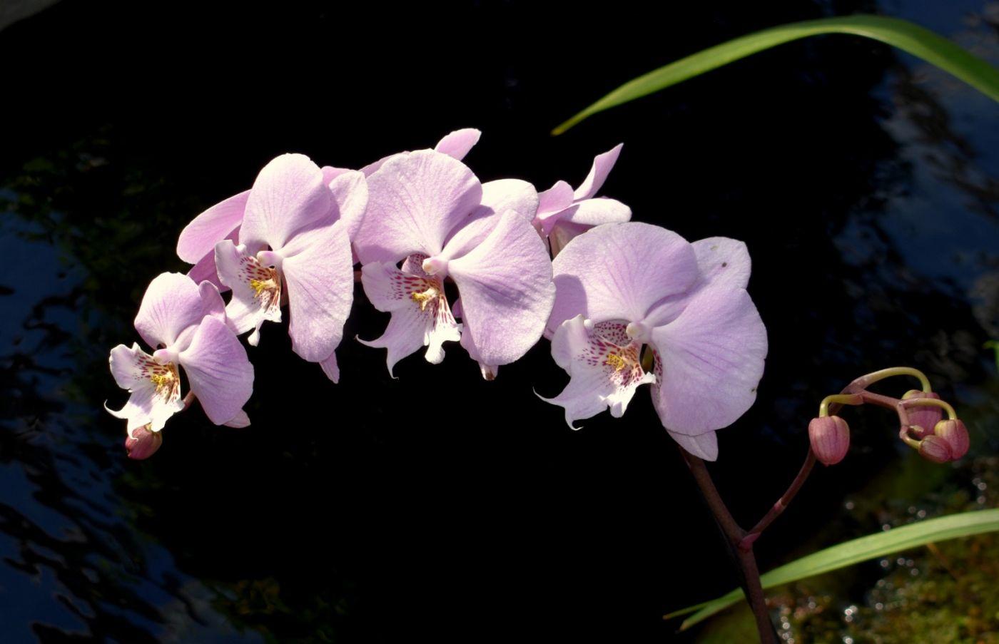 纽约植物园兰花展_图1-24