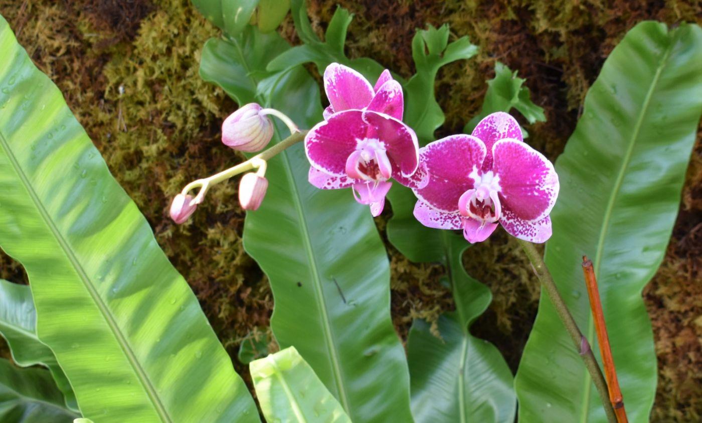 纽约植物园兰花展_图1-26