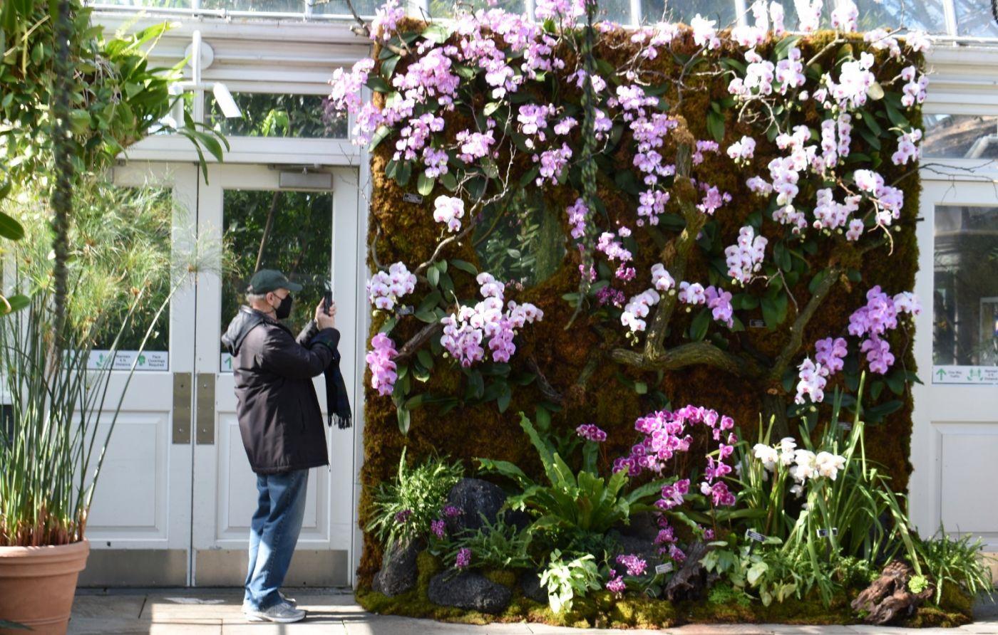 纽约植物园兰花展_图1-27