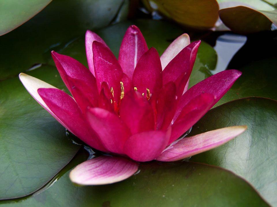 花卉日记15---睡莲_图1-24