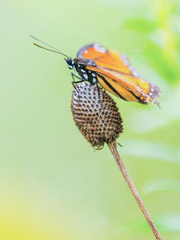 彩蝶,鲜花伴侣_图1-10