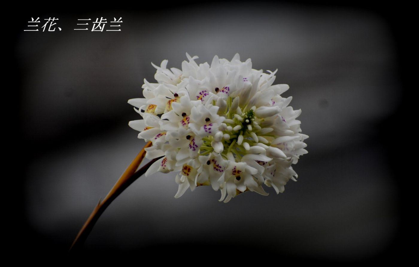 花草图谱 (30)_图1-7
