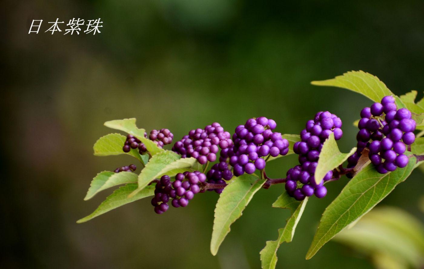 花草图谱 (30)_图1-8