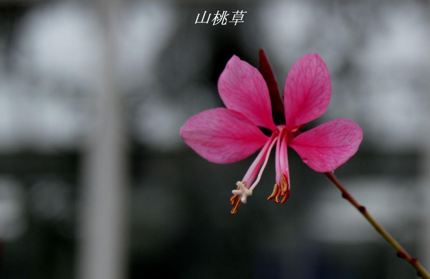 花草图谱 (30)_图1-17