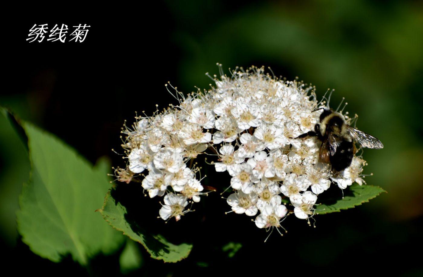 花草图谱 (30)_图1-31