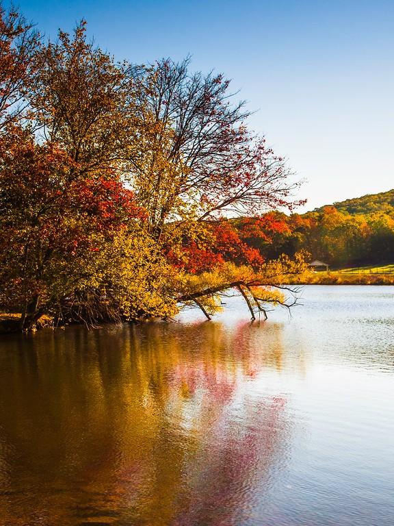 宾州 French Creek State Park,迷人秋季_图1-9