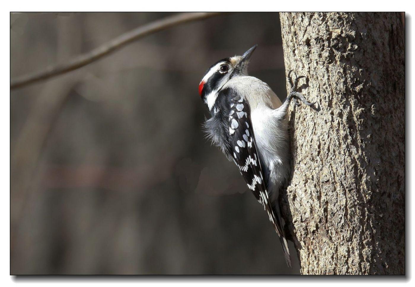 中央公园拍小鸟_图1-2