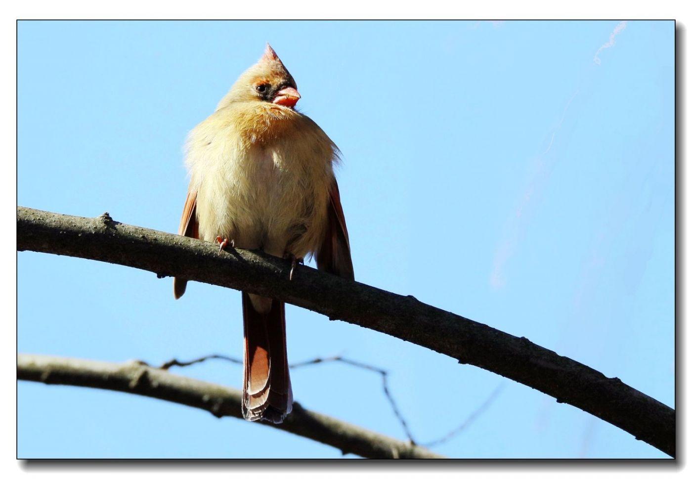 中央公园拍小鸟_图1-6