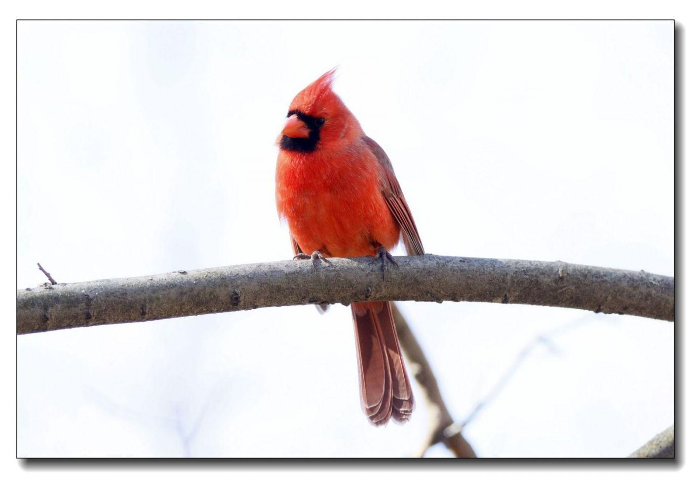 中央公园拍小鸟_图1-7