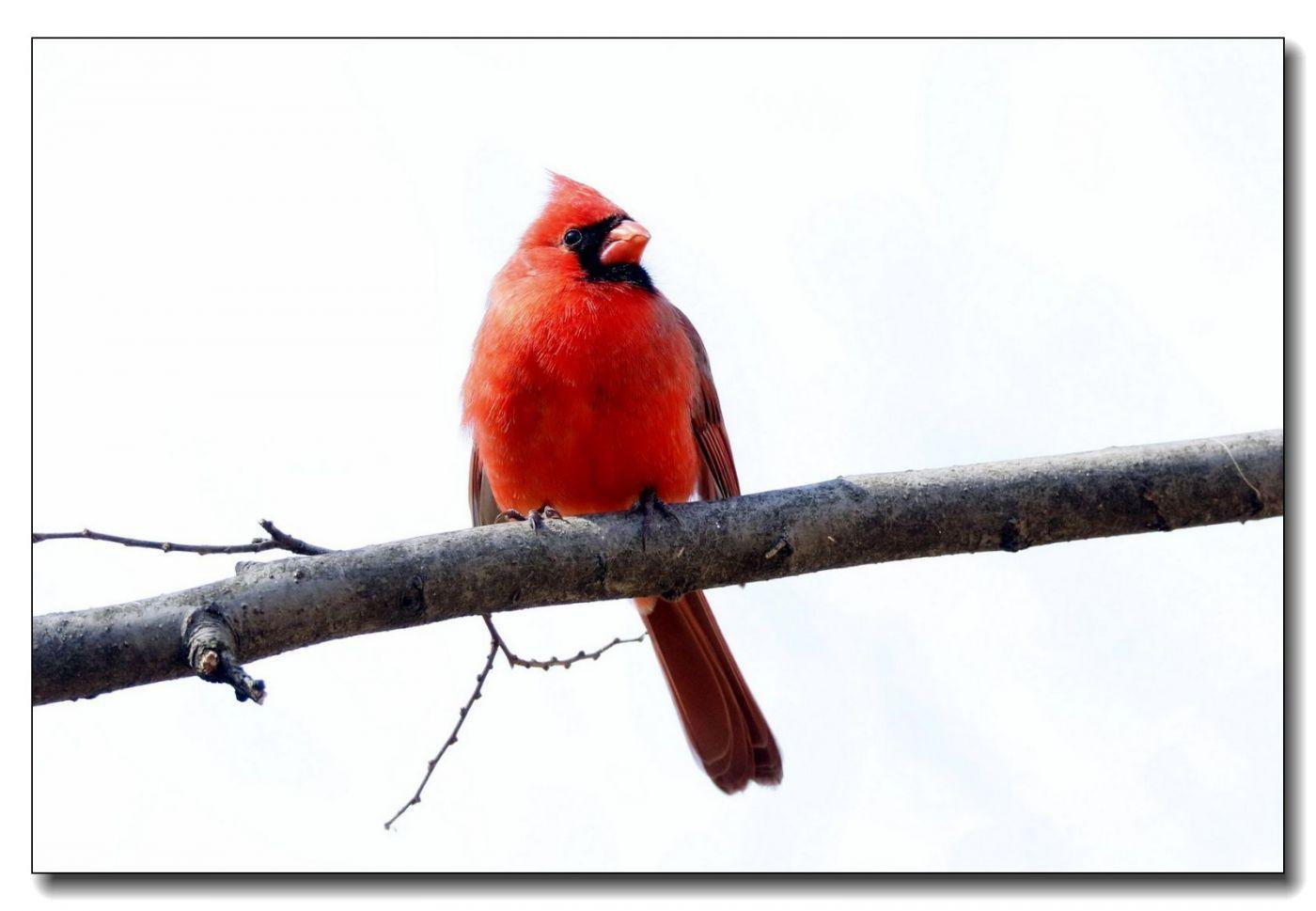 中央公园拍小鸟_图1-8