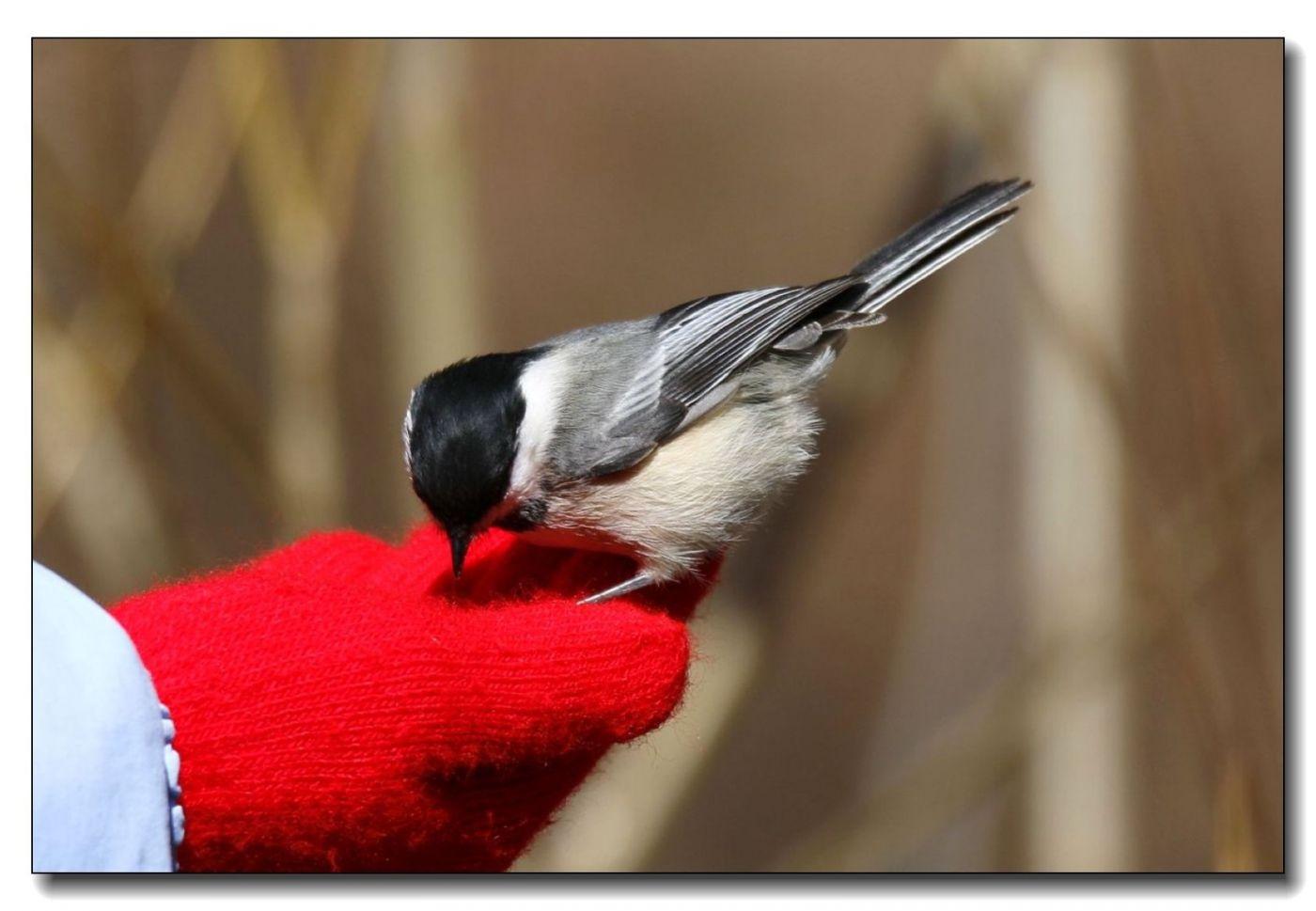中央公园拍小鸟_图1-10