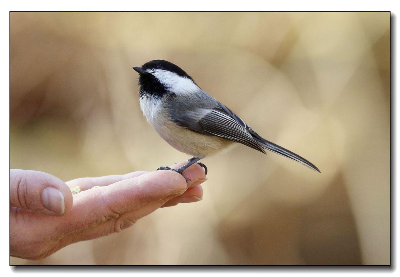 中央公园拍小鸟_图1-11
