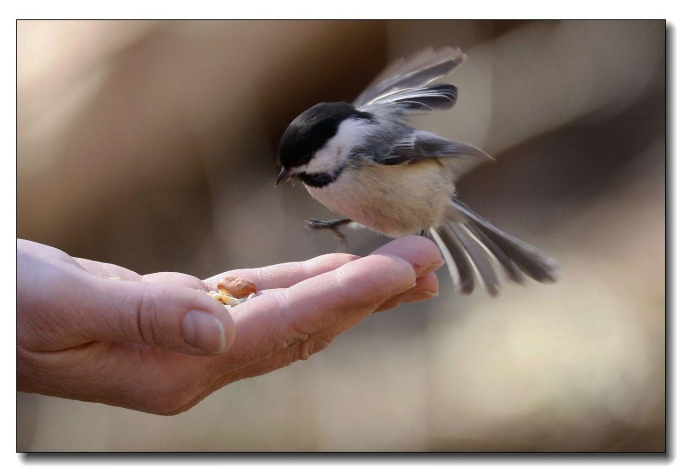 中央公园拍小鸟_图1-12