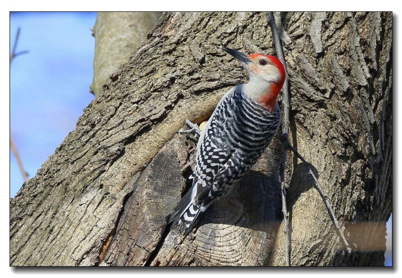 中央公园拍小鸟_图1-15