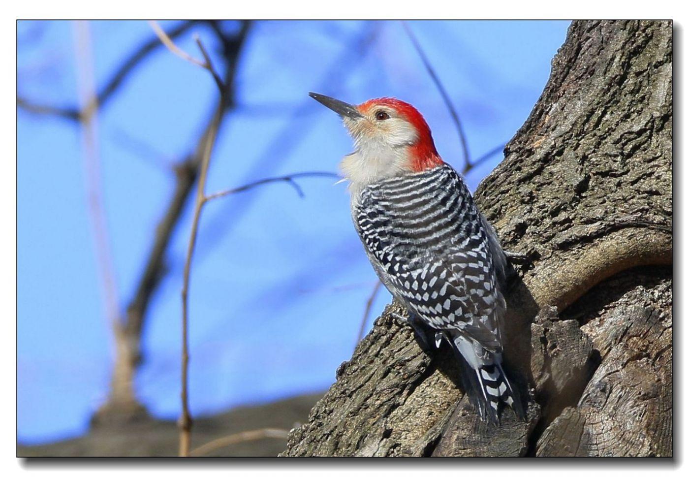 中央公园拍小鸟_图1-16