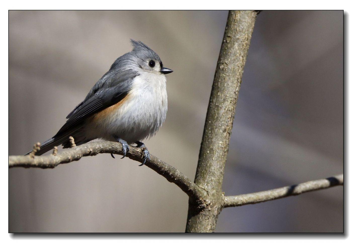 中央公园拍小鸟_图1-18