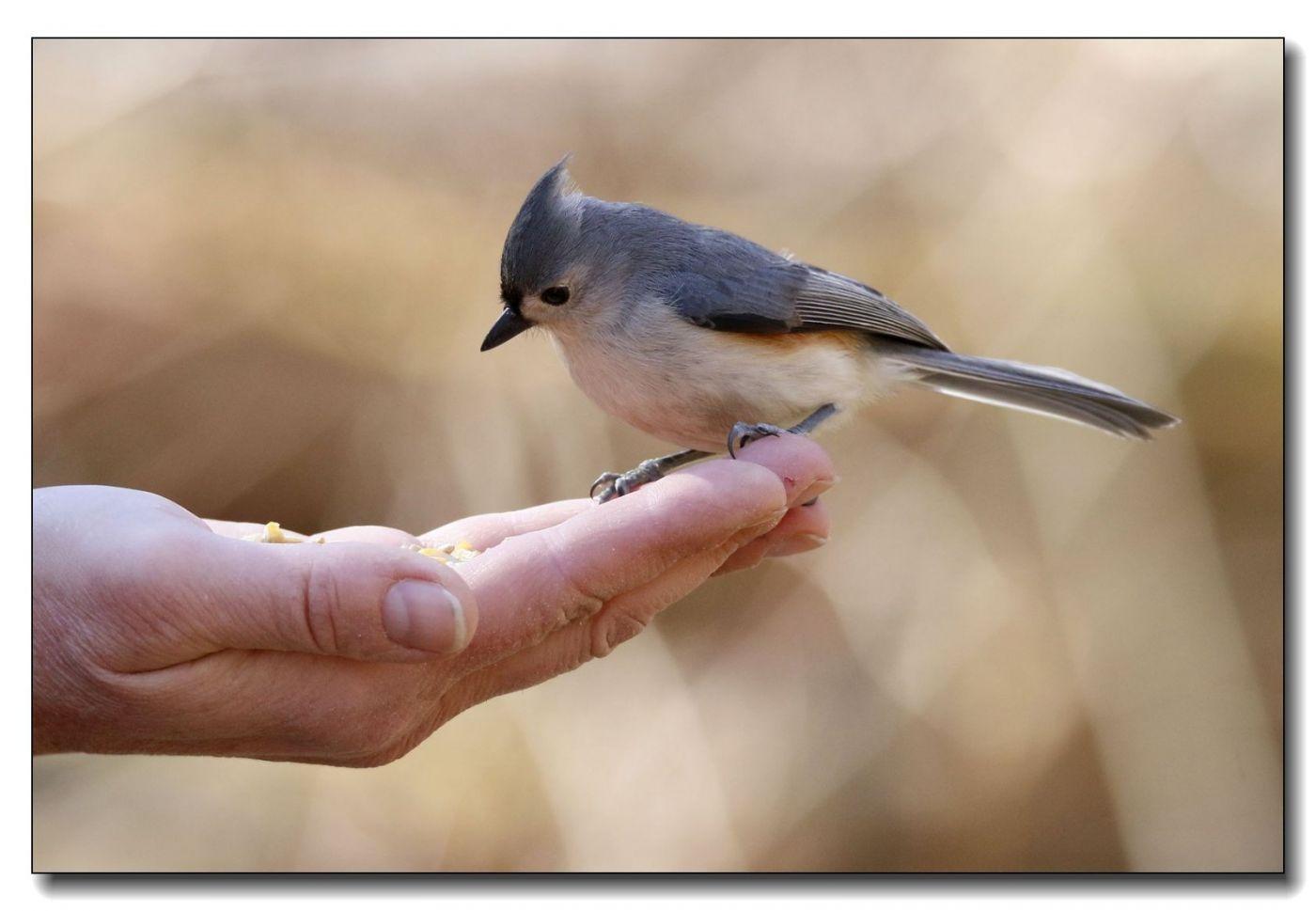 中央公园拍小鸟_图1-19