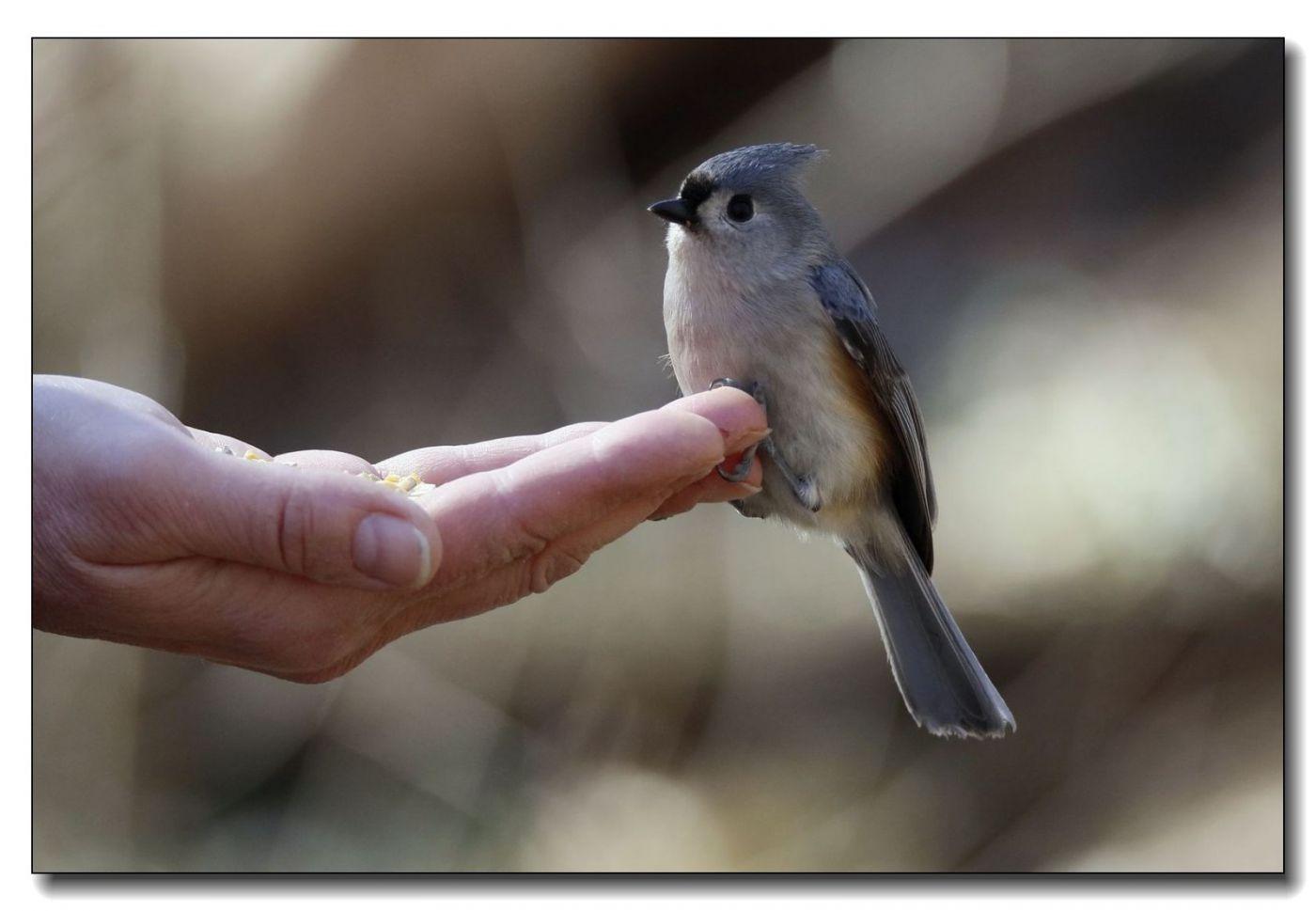 中央公园拍小鸟_图1-20