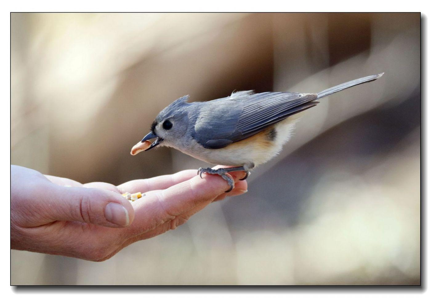 中央公园拍小鸟_图1-21