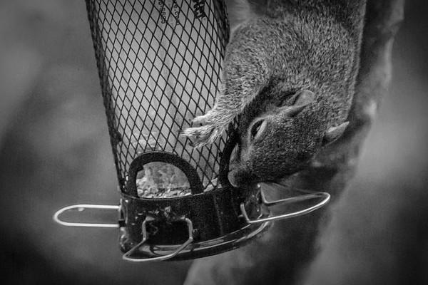 小松鼠,树上树下_图1-10