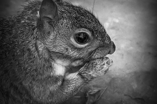 小松鼠,树上树下_图1-2