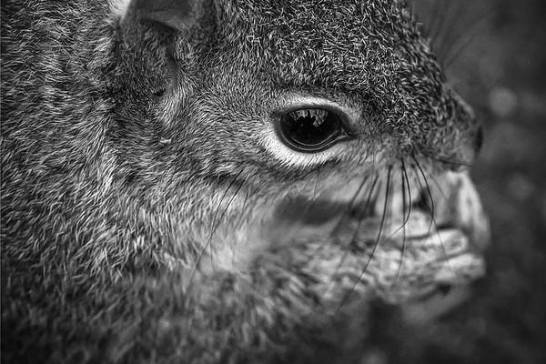 小松鼠,树上树下_图1-11