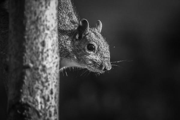 小松鼠,树上树下_图1-1