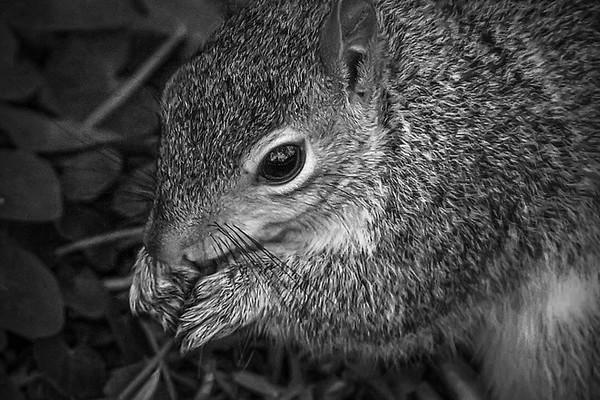 小松鼠,树上树下_图1-4