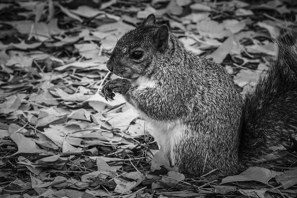 小松鼠,树上树下_图1-9