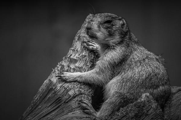 小松鼠,树上树下_图1-5