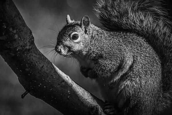 小松鼠,树上树下_图1-7