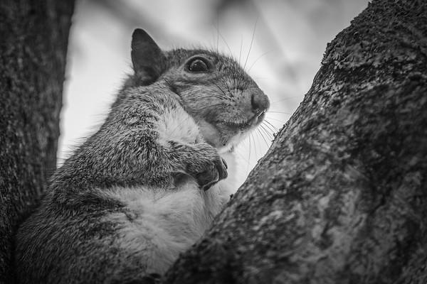 小松鼠,树上树下_图1-3