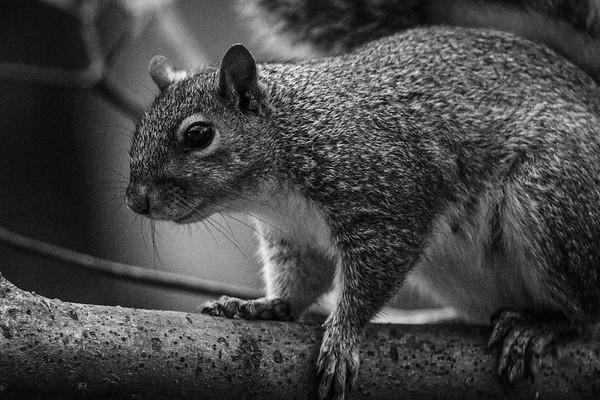 小松鼠,树上树下_图1-6