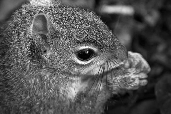 小松鼠,树上树下_图1-8
