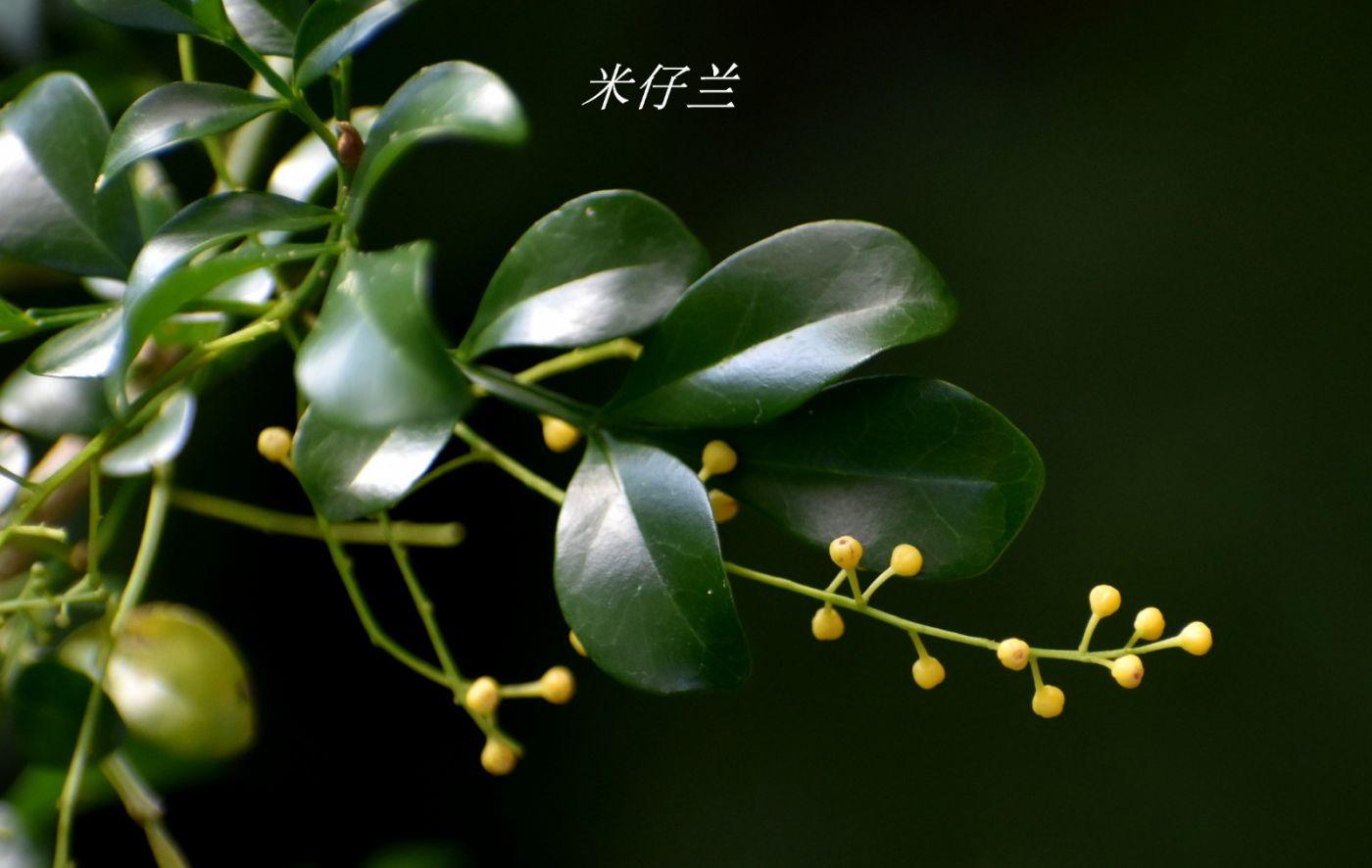 花草图谱 (31)_图1-13