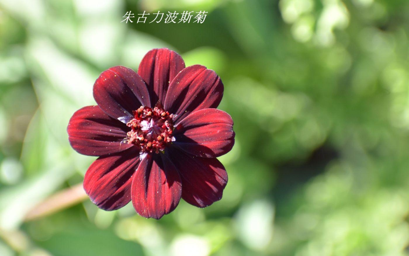 花草图谱 (31)_图1-18