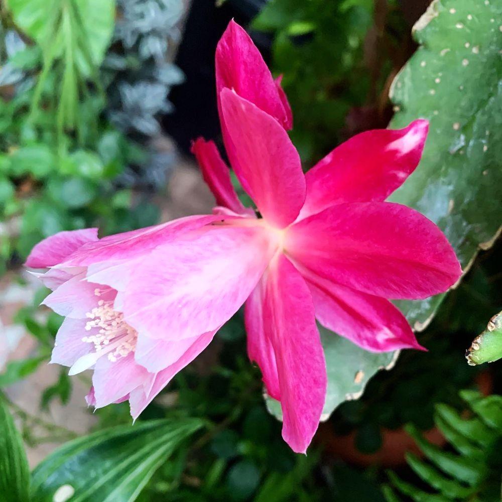 花卉日记 19_图1-3