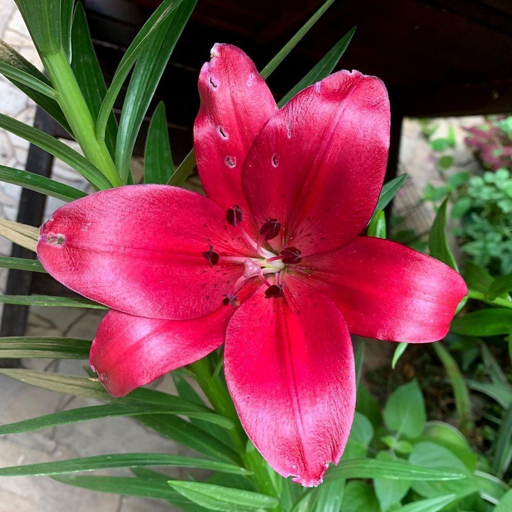 花卉日记 19_图1-7