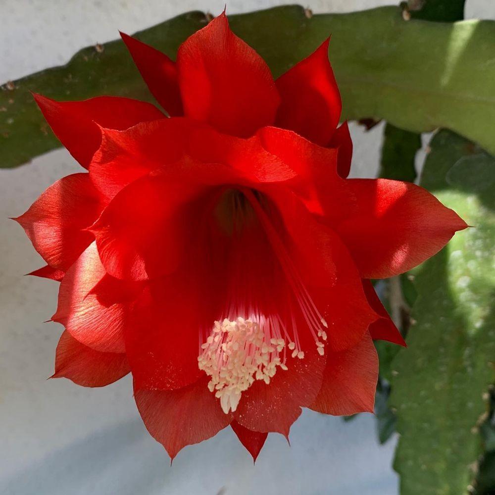 花卉日记 19_图1-18