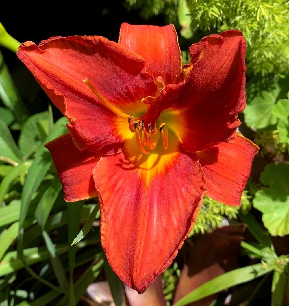 花卉日记 19_图1-20