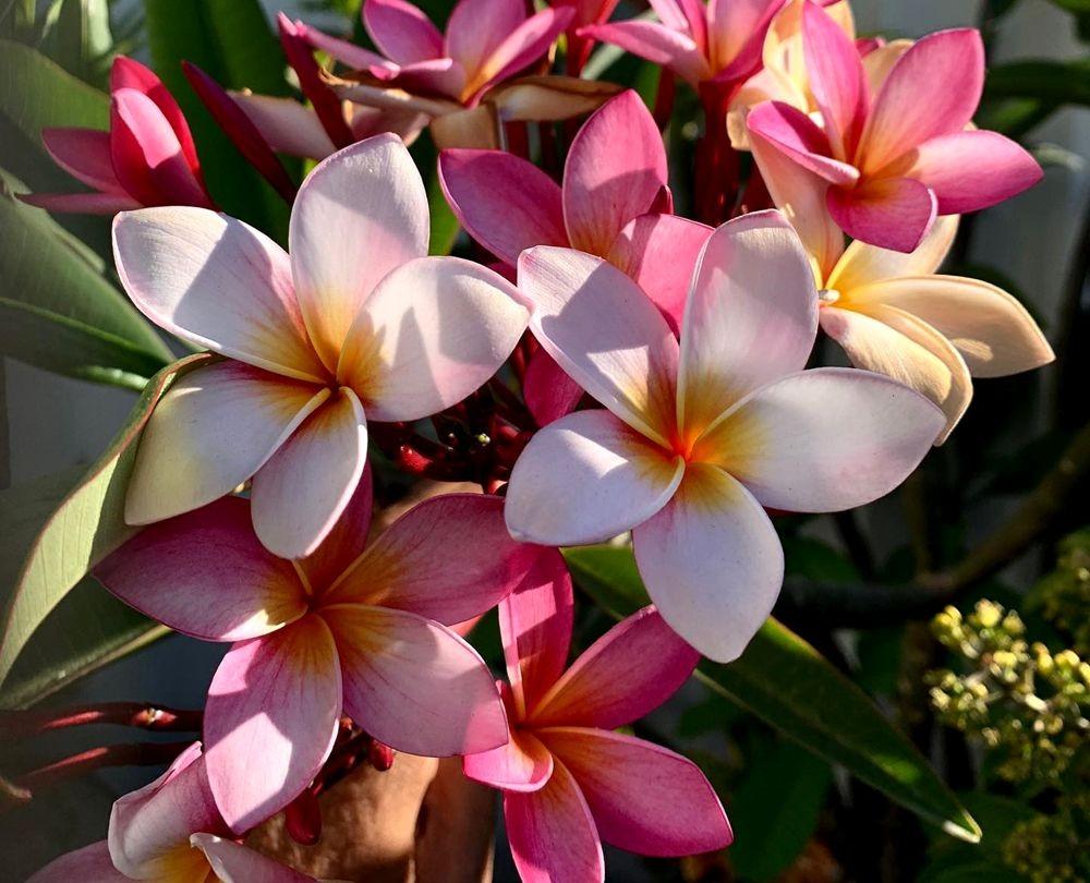 花卉日记 19_图1-26