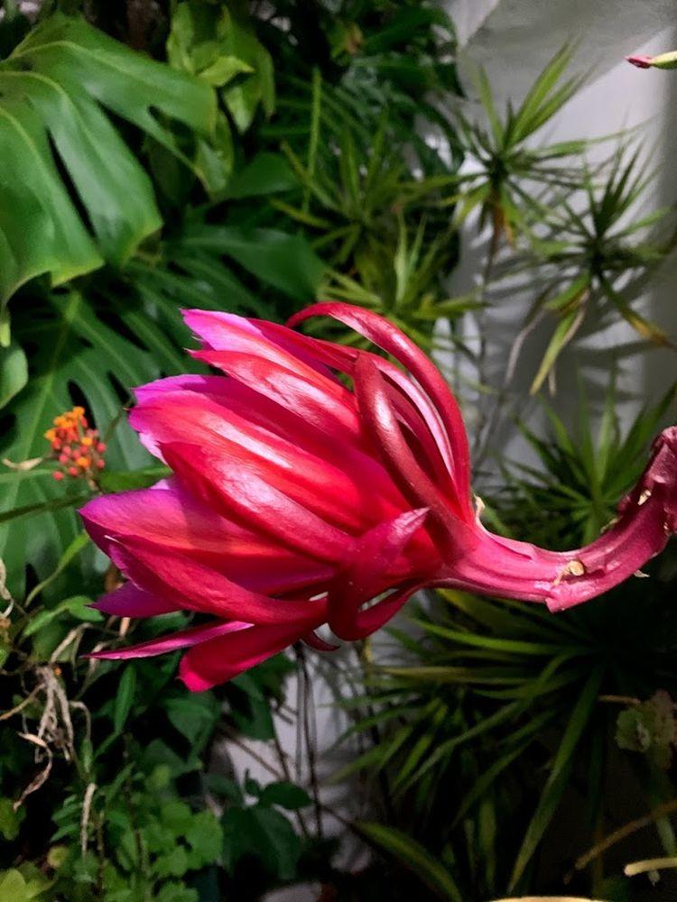 花卉日记-20_图1-2