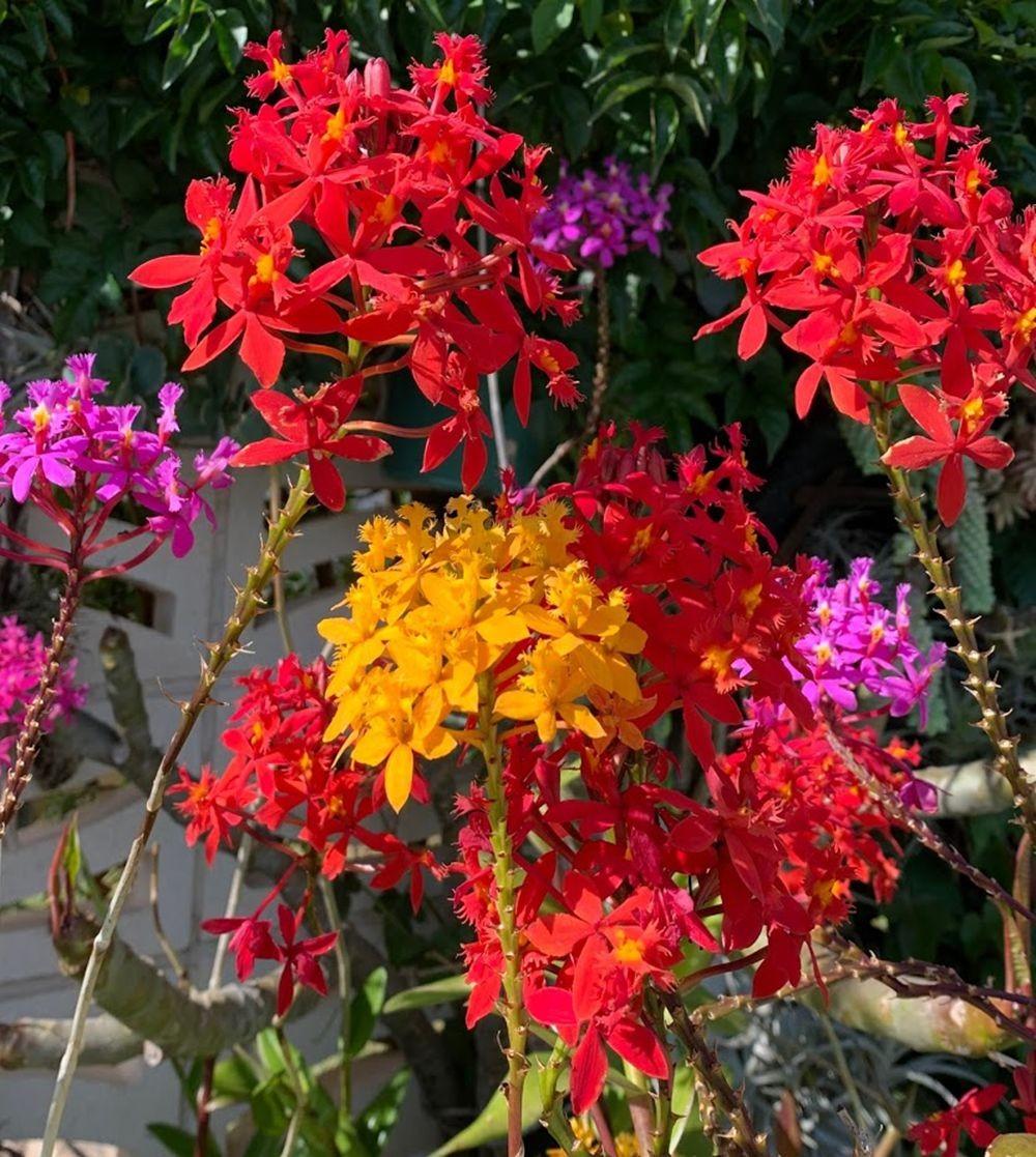 花卉日记-20_图1-3